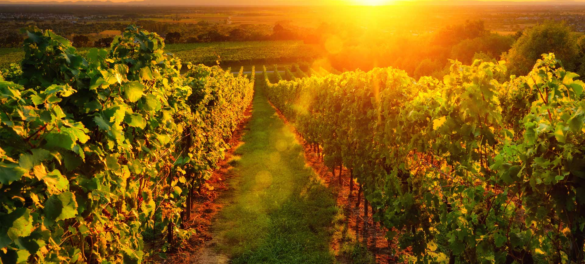 savoir-faire d'un producteur de Chablis pour un vin de renommée internationale